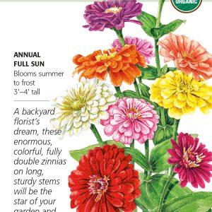 Zinnia Benarys Giant Blend Organic