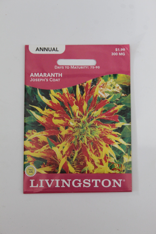 cLivingston Amaranth Joseph's Coat