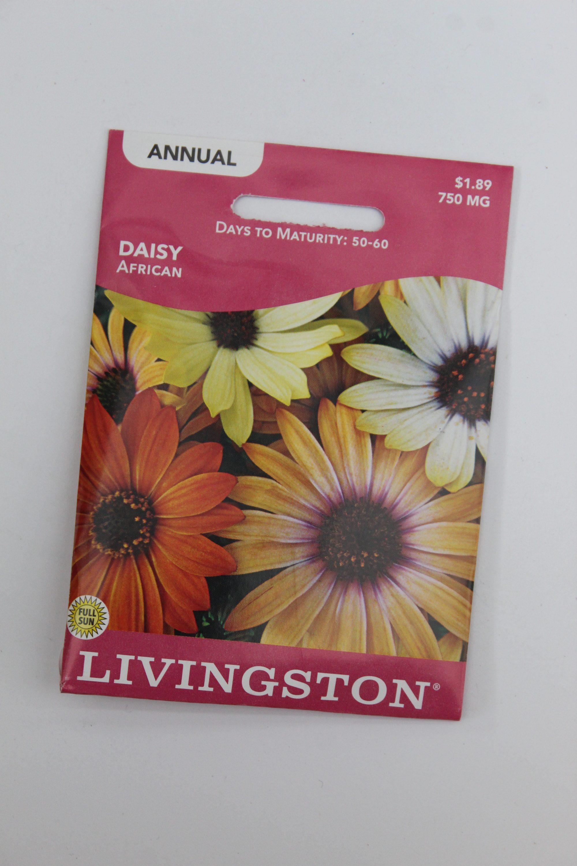 Livingston Daisy African