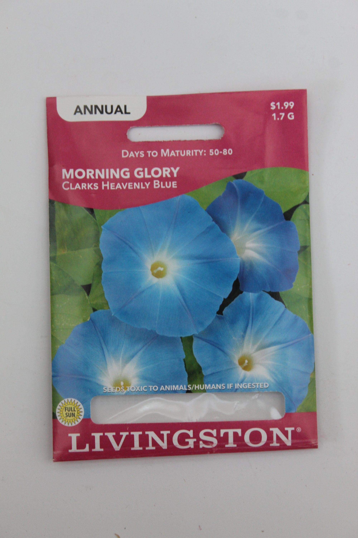 Livingston Morning Glory Clarks Heavenly Blue