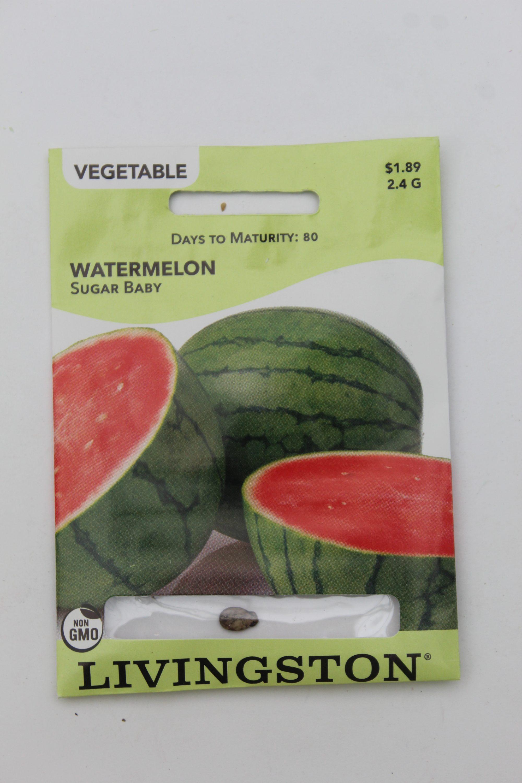 Livingston Watermelon Sugar Baby